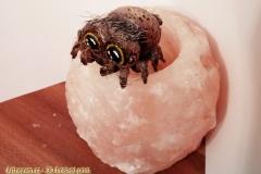 SpiderLucas_BIG_2